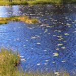 Sommer in Süd Norwegen 2017 (Teil 3)