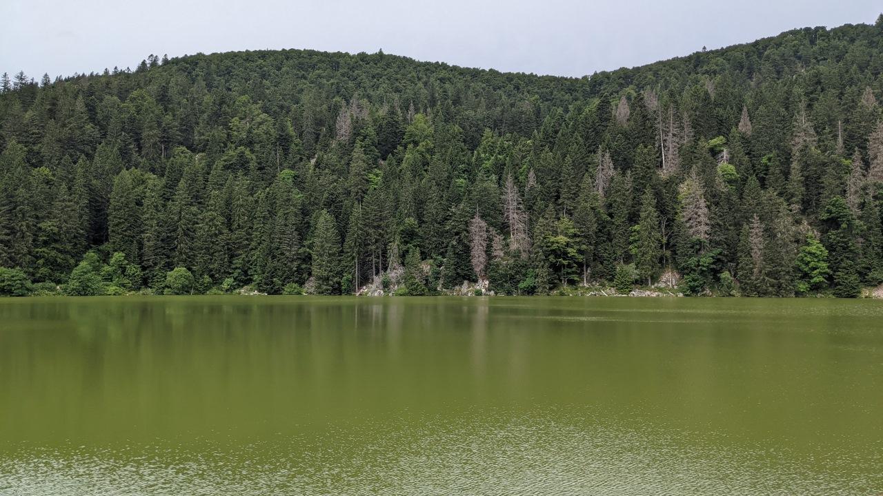 Der Lac Vert in den Vogesen mit grünem Wasser