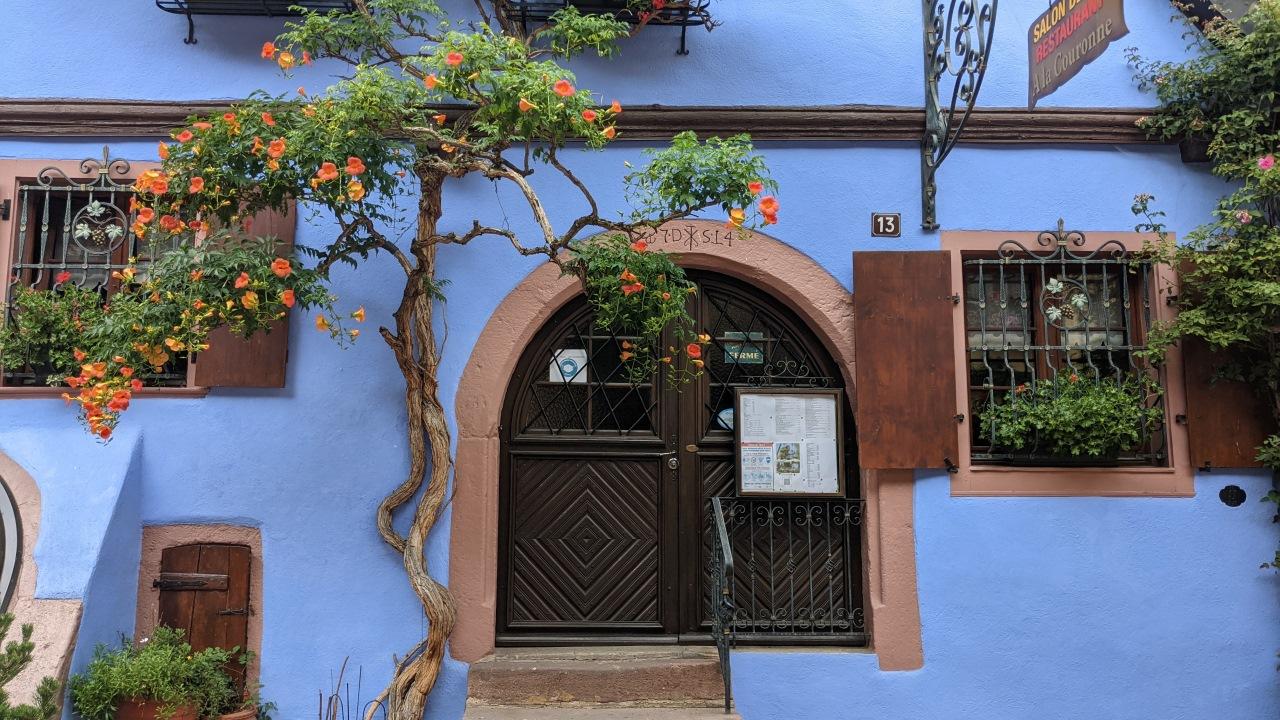 blau gestrichenes Haus in Riquewihr mit blühendem Granatapfelbaum