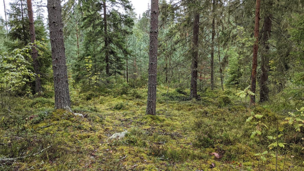 Wald mit unterschiedlichen Grüntönen