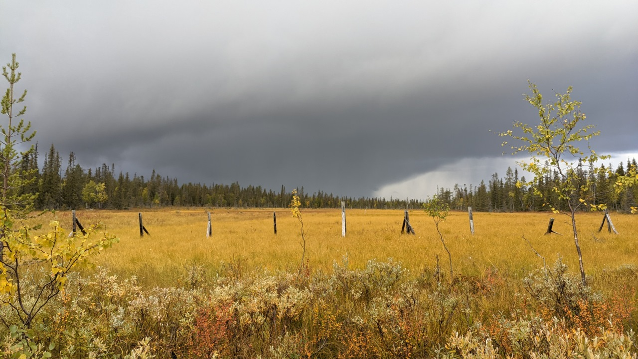Hochmoor in Finnland im Herbst